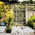 Expert Tips for Garden Design Dilemmas