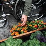 Gardening Made Practical  For Those With Disabilities